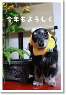osyougatu1.jpg
