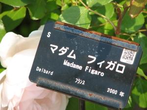 20060601174958.jpg