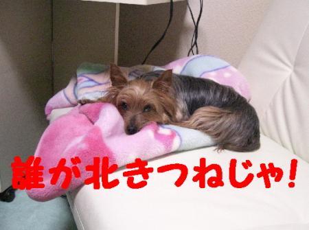 コピー ~ 2009.2.14to 079