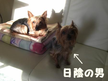 コピー ~ 2009.2.14to 089