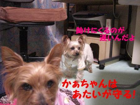 コピー ~ 2009.3.9to 114