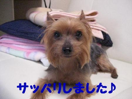 コピー ~ 2009.4.21to 097