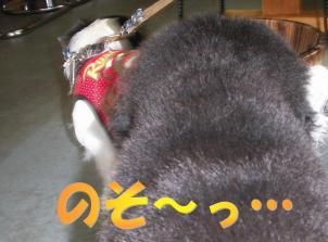 20080828005.jpg