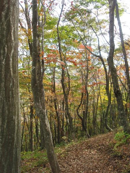 PB020026.JPG登山道.jpg
