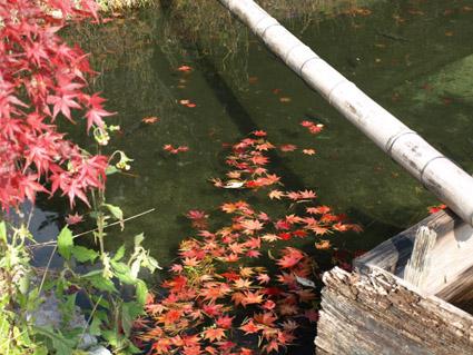 2池にモミジ2