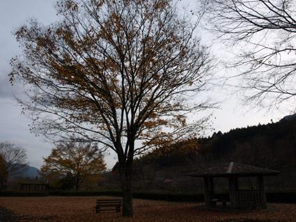 4落ち葉の空間