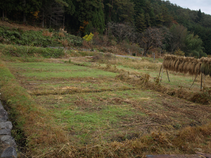 4草刈り前