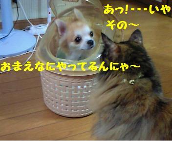コタ君_081008