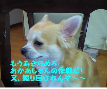 小太郎_081011_1