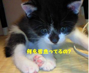 カイト_081016_1
