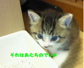 キキ_081016_1