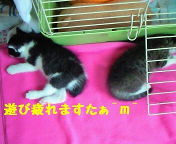 カイト&キキ_081017_1