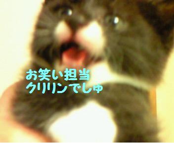 クリリン_081019_1