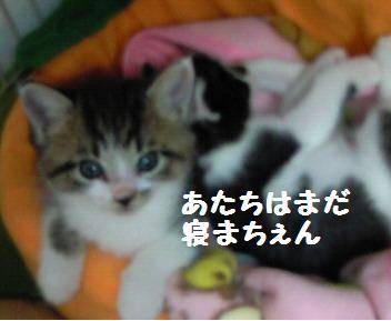 キキ_081019_1