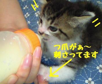 キキ_081020_1