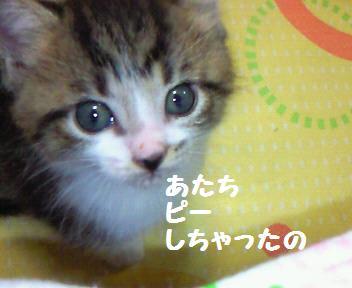 キキ_081021_1