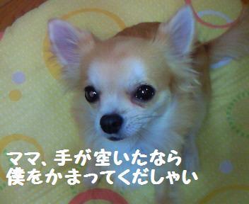 小太郎_081022_1