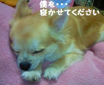小太郎_081023_1