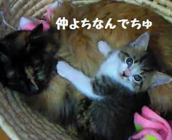 キキ_081023_1