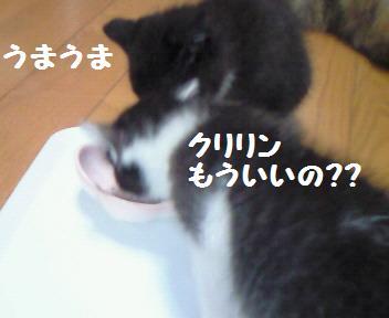 カイト_081025_3