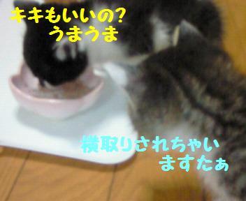 カイト_081025_4