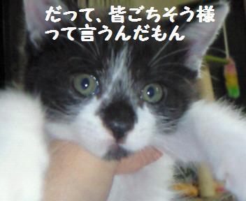 カイト_081025_5