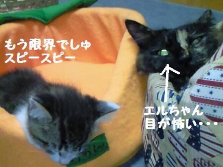 エル&キキ_081029_1a