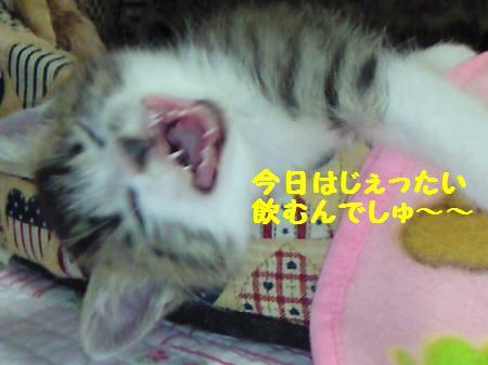 キキ_081030_1a