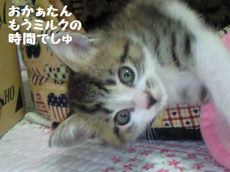 キキ_081030_2a