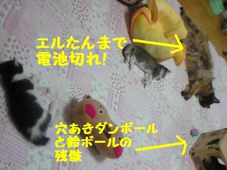 エル&カイト&キキ_081031_1a
