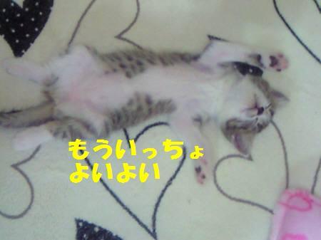 キキ_081102_1a