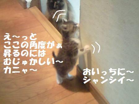 キキ_081104_2a