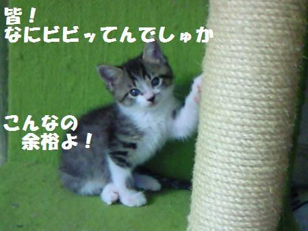 キキ_081104_5a