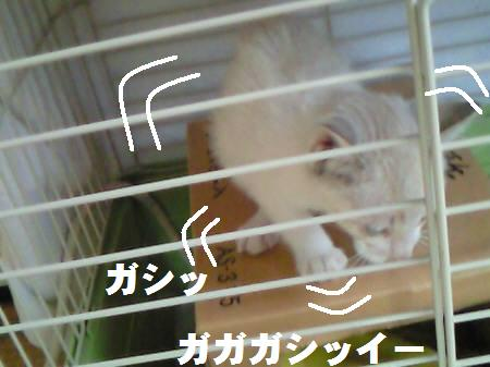 サリー_081107_2a