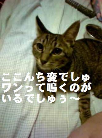 みなみ_ 081110_1a