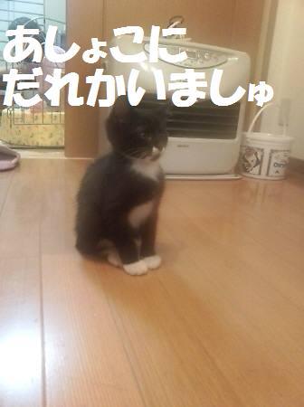 みるく_081119_1a