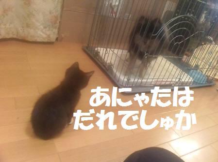 みるく_081119_2a