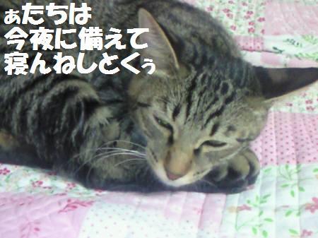 みなみ_081120_1a