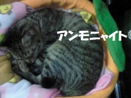 みなみ_081123