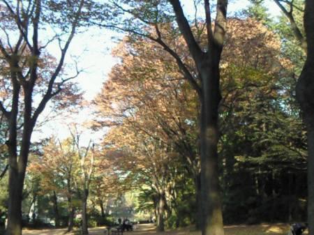 石神井公園_081123_3