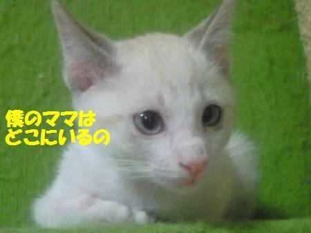 サリー_081124_1