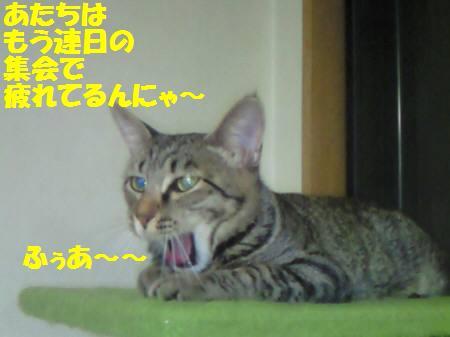 みなみ_081124a