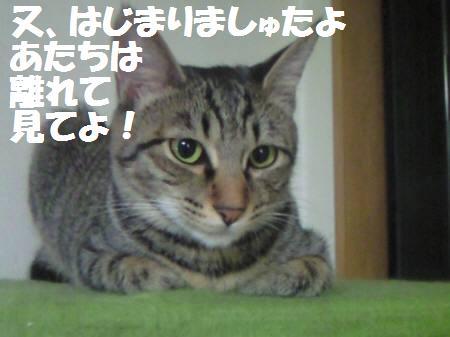 みなみ_081127_1a