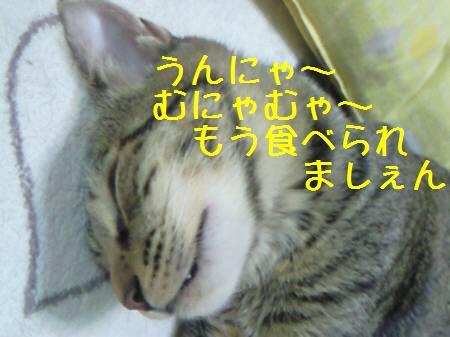 みなみ081214_1a