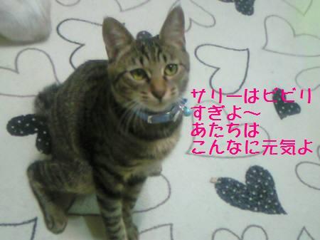 みなみ081215_1a