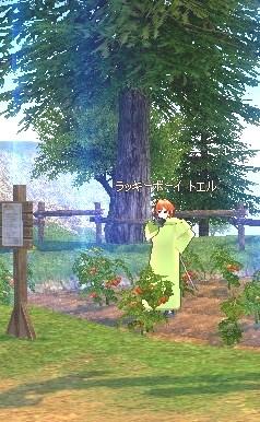 mabinogi_tomato3.jpg
