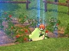 mabinogi_tomato5.jpg