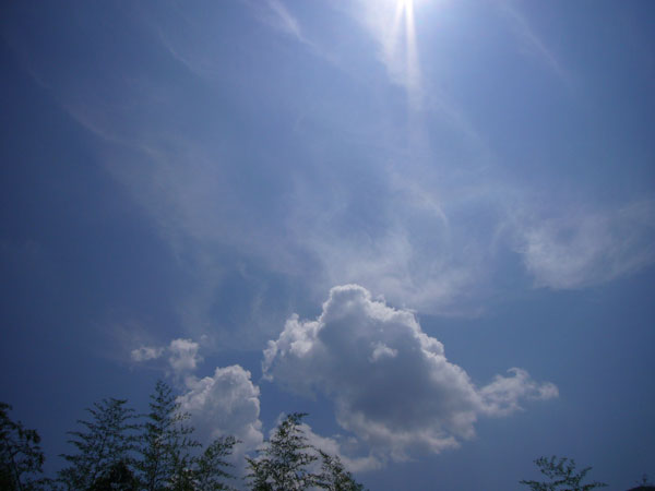 20060811.jpg