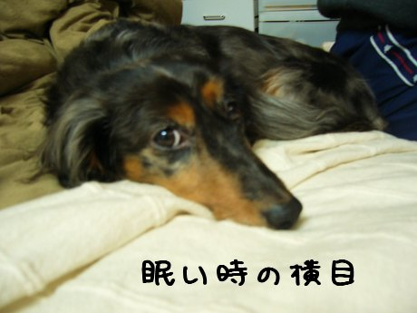 娘犬眠い時の横目