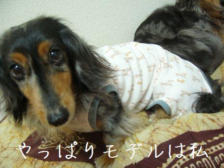 母犬モデル